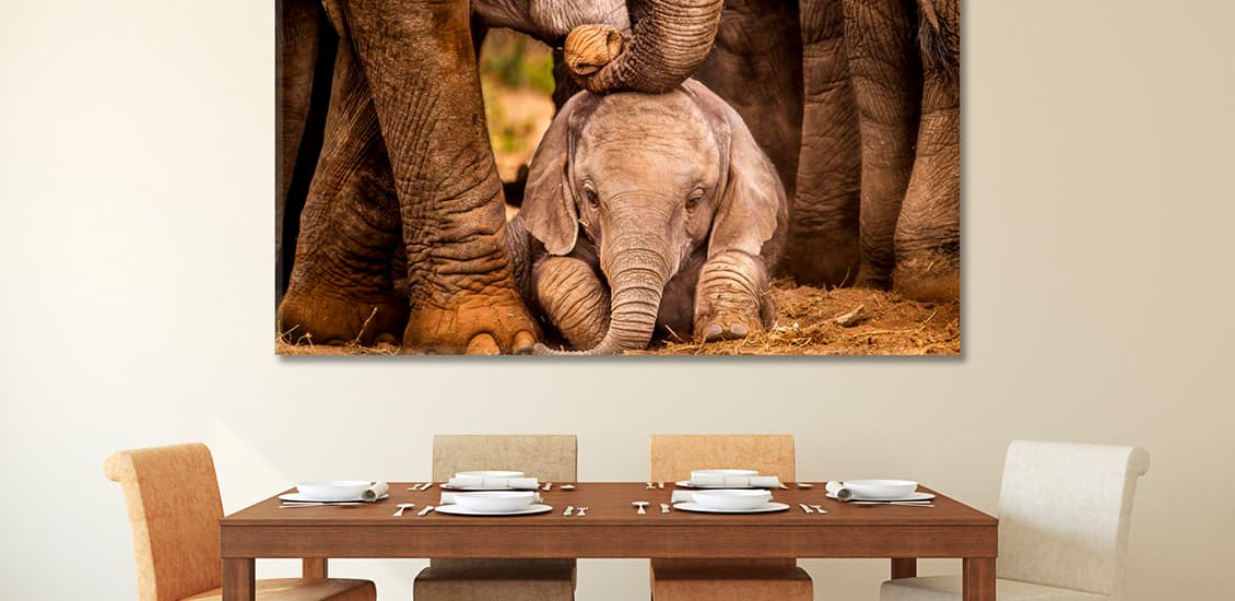 Room interiors elephant print