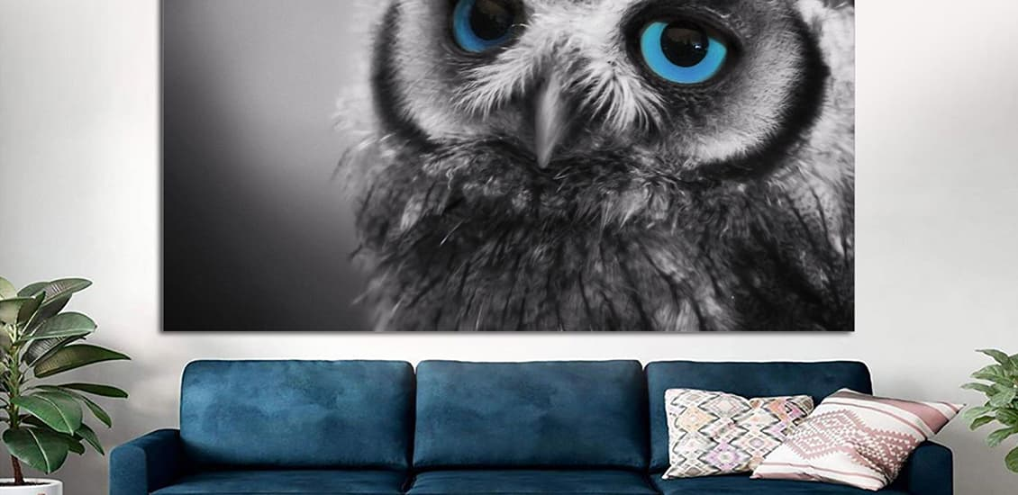 Office interiors with owl motifs